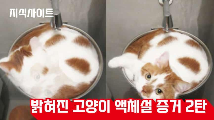 밝혀진-고양이-액체설-증거-2탄