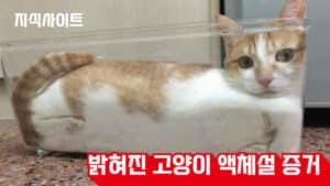 밝혀진 고양이 액체설 증거