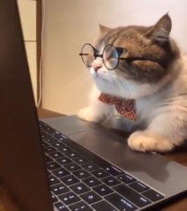 사실은 지구를 침략한 고양이