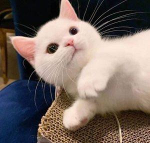 심쿵주의 귀여운 아기고양이