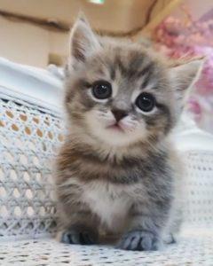 사랑스러운 아기 고양이 영상