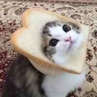 식빵 쓴 너무 귀여운 고양이들