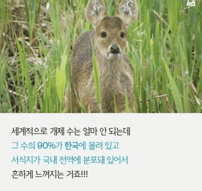 전세계에서 개체수 90%가 한국에만 있는 품종