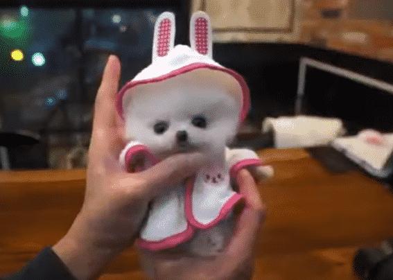 심쿵주의 인형같은 아기강아지